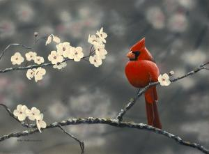 cardinal-and-blossoms-peter-mathios