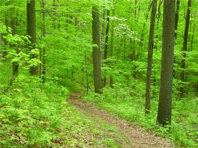 P1110008 green trail through woods